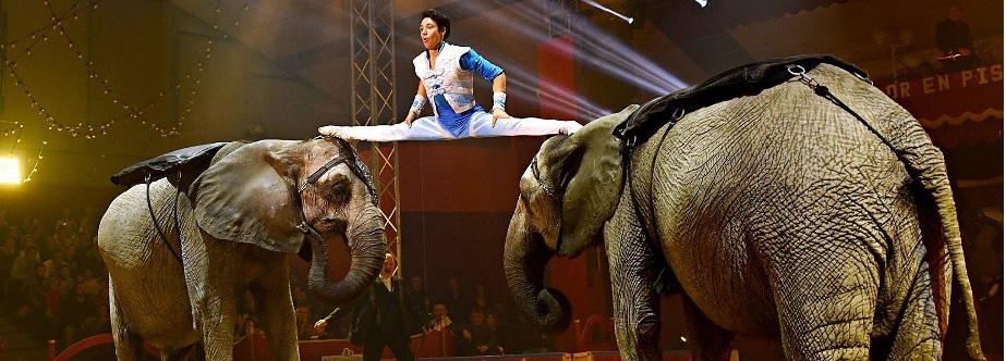 Circus: Culture for Millions